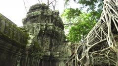 wide pan of devata and a strangler fig at ta prohm temple near angkor wat, cambodia