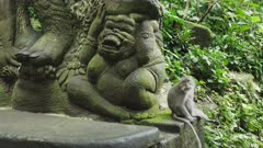 a balinese long tailed macaque sits beside a stone statue at ubud monkey forest on the island of bali in indonesia