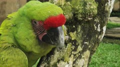 close up of a military macaw at bali bird park on the island of bali, indonesia