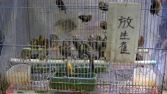 close up of a cage of larks for sale at fa yuen bird market in hong kong, china- with a sign saying releasing the lark brings good luck