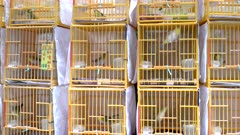 square plastic bird cages with birds for sale at fa yuen bird market in hong kong, china