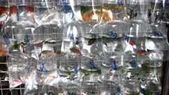 zoom in on tropical fish in plastic bags at fa yuen markets in hong kong, china