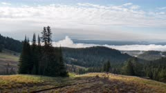 an early morning time lapse of fog and a copse of trees at dunraven pass on mt washburn in yellowstone national park, usa