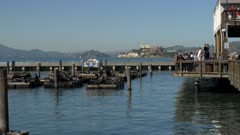wide shot of tourists watching the california sea lion at pier 39 on the waterfront of san francisco
