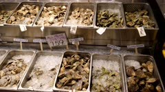 a variety of fresh oysters on ice for sale at a store in portland maine