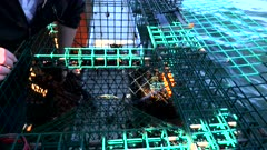 a wide view of a lobster being removed from a trap by a fisherman at portland, maine