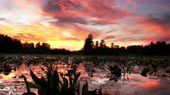 brilliant red sunset at okeefenokee swamp as viewed from a from boat in georgia, usa