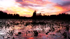 okeefenokee swamp at sunset with waterlilies in the foreground