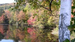 a birch tree trunk and a pond at newbury during fall color in new hampshire, usa