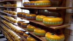 a close view of gouda cheese wheels on shelves at zaanse schans near amsterdam, netherlands