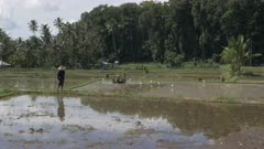 a 4K 60p clip of a farmer watching as a rice paddy is prepared for planting by mechanical hoeing on bali, indonesia