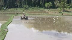 a 4K 60p clip of a farmer preparing a rice paddy for planting with a machine in bali, indonesia