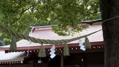 sacred rope between couple camphor laurel trees at meiji jingu shrine in tokyo, japan