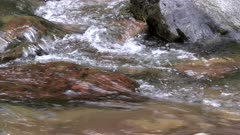 tracking clip of a water ouzel diving into a stream at glacier national park in montana, usa