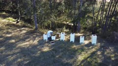 an aerial fly in drone shot of a beekeeper harvesting honey from hives in australia