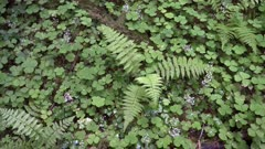 ferns growing at hoh rainforest in the olympic national park of the us pacific northwest