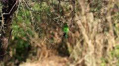 rear view of a little bee eater perched in a tree at serengeti national park in tanzania