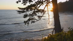 sunset shot of the coastline and a pine tree at rialto beach in the olympic national park of the us pacific northwest
