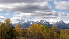 panning right clip of aspen trees in autumn foliage at willow flats in grand teton national park in wyoming, usa