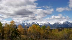aspen trees in autumn foliage at willow flats in grand teton national park in the united states