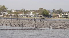 tracking shot of workers in a small dinghy motoring through an oyster lease at merimbula on the south coast of new south wales, australia