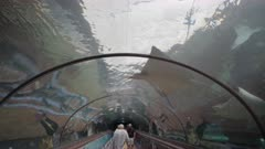 wide view of stingray swimming above a tunnel walkway at sealife aquarium in sydney, australia