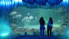 two female visitors watch large fish at sealife aquarium in sydney, australia