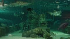 sharks and fish in a temperate ocean tank at sealife aquarium at sydney, australia