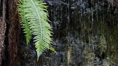 fern growing at entrance to glow worm tunnel near lithgow in nsw, australia