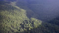 a high angle pan of rainforest from echo point in the blue mountains of nsw, australia