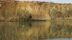 wide tracking shot of an australian pelican swimming on the murray river at big bend in south australia