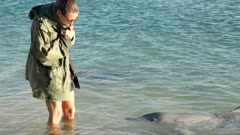 a wildlife ranger up close to a dolphin, waiting to be fed, at monkey mia in western australia