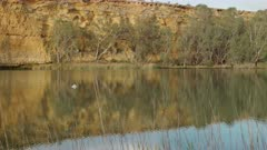 an australian pelican swimming on the murray river at big bend in south australia