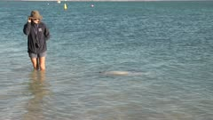 a wildlife ranger talks about bottlenose dolphins during the daily feeding at monkey mia in western australia