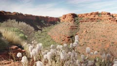 an afternoon shot of wildflowers with kings canyon in watarrka national park of the northern territory, australia