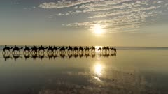 tracking clip of a camel ride at sunset on cable beach in broome in western australia