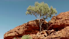 a low angle view of a gum tree growing on a rocky ridge at kings canyon in watarrka national park of the northern territory, australia