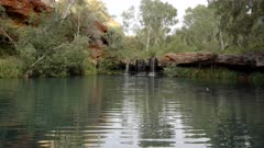 a close pan of the popular fern pool at dales gorge in karijini national park of western australia