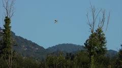 Eurasian kestrel hovering in holy spirit flight