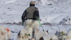 Dog Sledding In the Arctic tundra; Musher leading Dog team