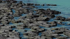 Stromatolites at Shark Bay wide