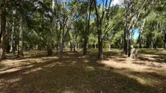A walk in the park 01 , gimbal