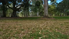 A walk in the park 02 , gimbal