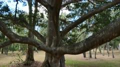 Tree, dolly up 02