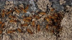 Termites repairing galleries