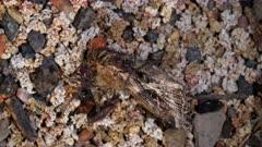 Ants feeding on a moth, close