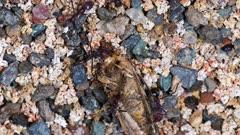 Ants feeding on a moth, wide
