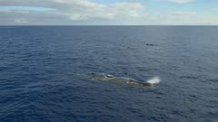 Three sperm whales with baby crossing over, 4K aerial 3/4 side shot