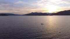 2 Humpback Whales dive showing tail, sunset in Norway