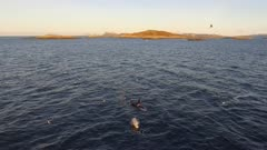 Orcas pod cruising in warm sunlight, Norway